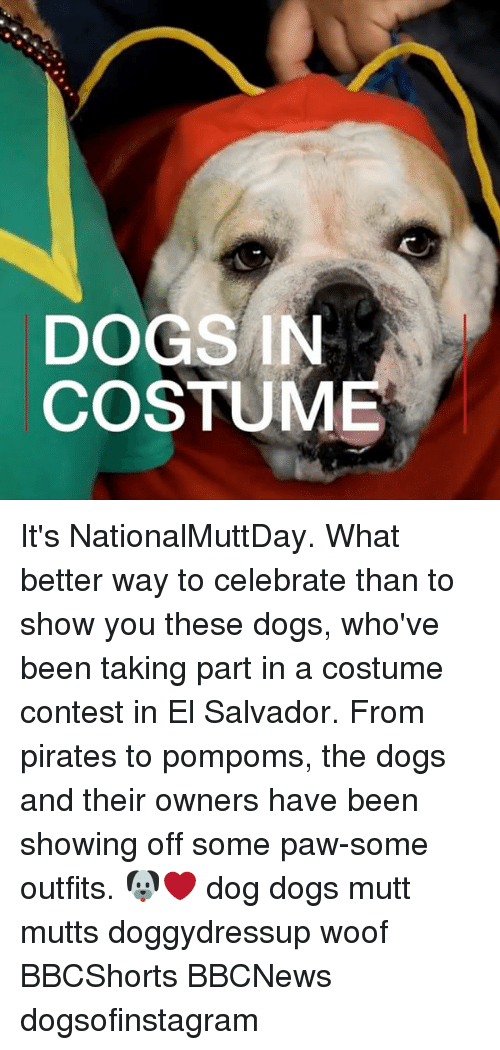 woofing: DOGS IN  COSTUME It's NationalMuttDay. What better way to celebrate than to show you these dogs, who've been taking part in a costume contest in El Salvador. From pirates to pompoms, the dogs and their owners have been showing off some paw-some outfits. 🐶❤️ dog dogs mutt mutts doggydressup woof BBCShorts BBCNews dogsofinstagram