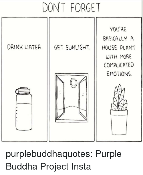 Instagram, Tumblr, and Blog: DONT FORGET  YOU'RE  BASICALLY A  DRINK WATER GET SUNLIGHT. HOUSE PLANT  WITH MORE  COMPLICATED  EMOTIONS purplebuddhaquotes:  Purple Buddha Project Insta