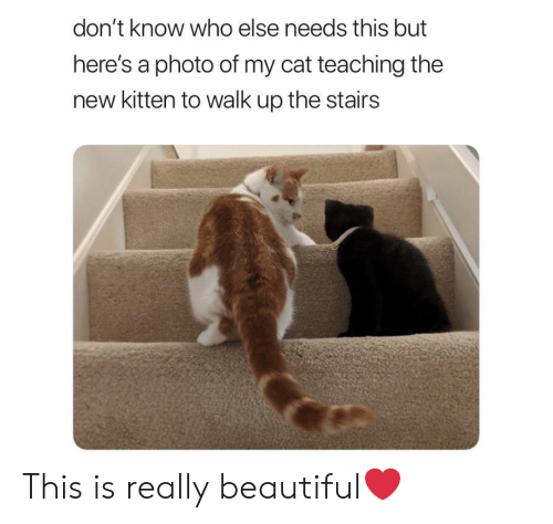 Beautiful, Teaching, and Cat: don't know who else needs this but  here's a photo of my cat teaching the  new kitten to walk up the stairs This is really beautiful❤️