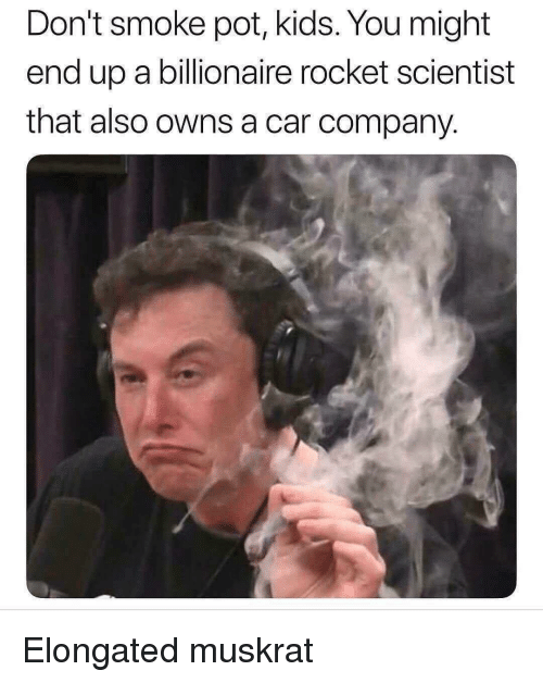Elongated: Don't smoke pot, kids. You might  end up a billionaire rocket scientist  that also owns a car company Elongated muskrat