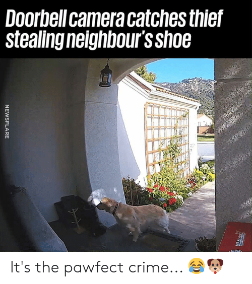 Crime, Dank, and Camera: Doorbell camera catches thief  Stealing neighbours Sh06 It's the pawfect crime... 😂🐶