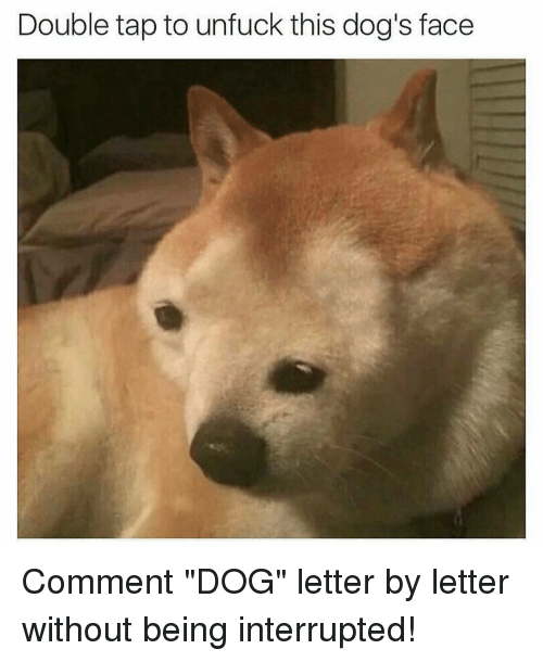 """Unfuckable: Double tap to unfuck this dog's face Comment """"DOG"""" letter by letter without being interrupted!"""