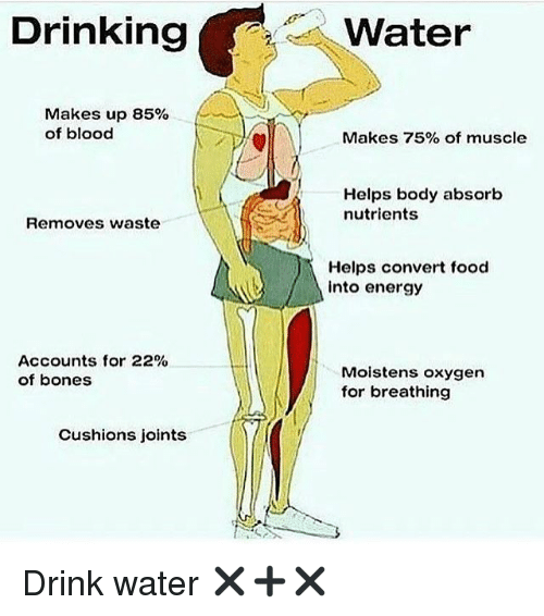 Convertable: Drinking  Makes up 85%  of blood  Removes waste  Accounts for 22%  of bones  Cushions joints  Water  Makes 75% of muscle  Helps body absorb  nutrients  Helps convert food  into energy  Moistens oxygen  for breathing Drink water ✖️➕✖️
