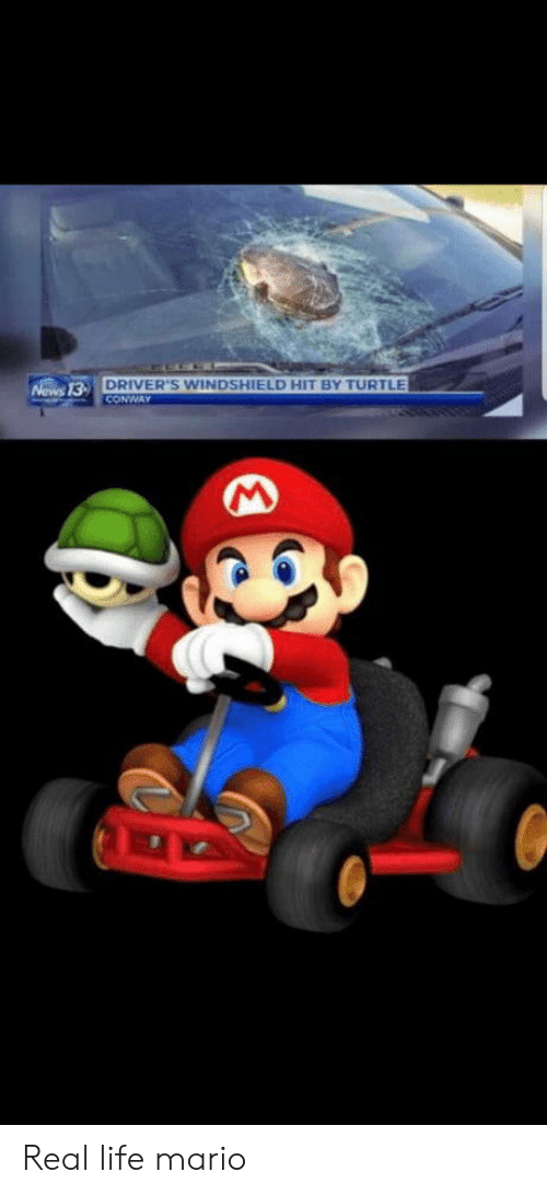Conway: DRIVER'S WINDSHIELD HIT BY TURTLE  CONWAY  Nows 13- Real life mario