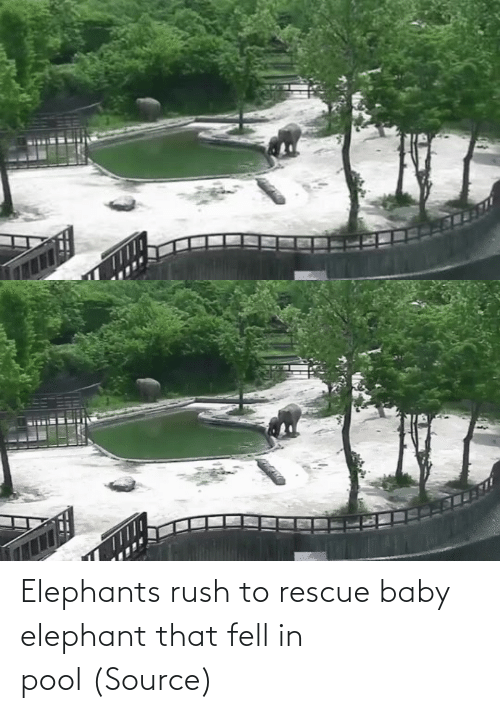 Baby: Elephants rush to rescue baby elephant that fell in pool (Source)