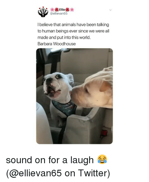 Animals, Memes, and Twitter: Ellie  @ellievan65  l believe that animals have been talking  to human beings ever since we were all  made and put into this world  Barbara Woodhouse sound on for a laugh 😂 (@ellievan65 on Twitter)