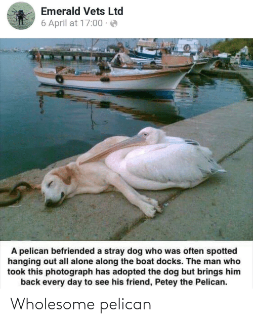 Along: Emerald Vets Ltd  6 April at 17:00 · e  A pelican befriended a stray dog who was often spotted  hanging out all alone along the boat docks. The man who  took this photograph has adopted the dog but brings him  back every day to see his friend, Petey the Pelican. Wholesome pelican