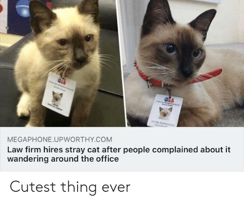 The Office: EON ADVOGATO  AL  Law firm hires stray cat after people complained about it  wandering around the office  MEGAPHONE.UPWORTHY.COM Cutest thing ever