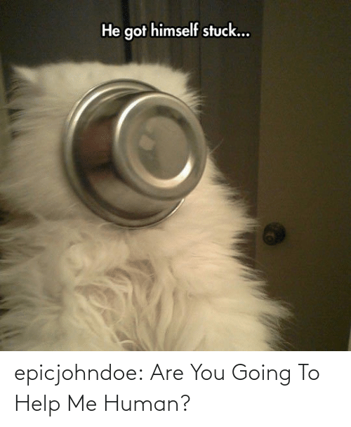 Help: epicjohndoe:  Are You Going To Help Me Human?