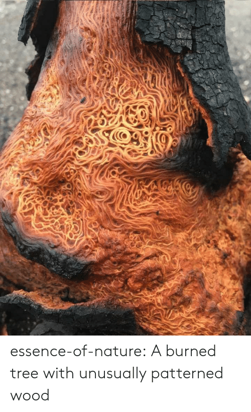burned: essence-of-nature:   A burned tree with unusually patterned wood