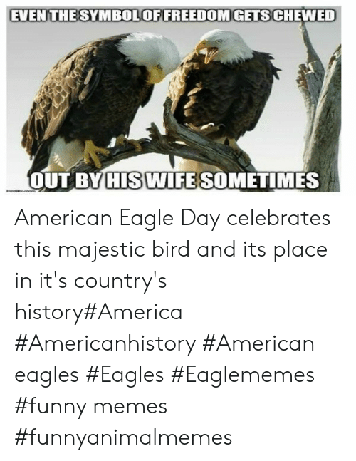 America, Philadelphia Eagles, and Funny: EVEN THESYMBOLOFFREEDOMGETS CHEWED  OUT BY HIS WIFE SOMETIMES American Eagle Day celebrates this majestic bird and its place in it's country's history#America #Americanhistory #American eagles #Eagles #Eaglememes #funny memes #funnyanimalmemes
