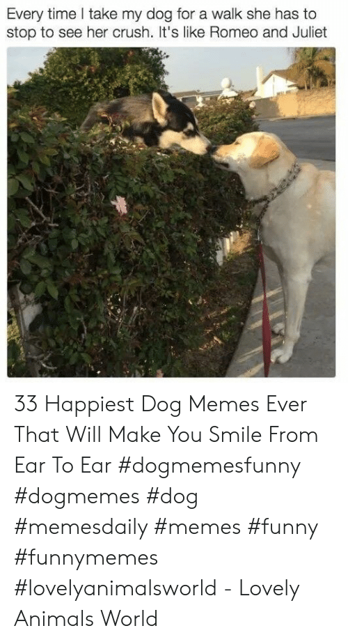 Romeo and Juliet: Every time take my dog for a walk she has to  stop to see her crush. t's like Romeo and Juliet 33 Happiest Dog Memes Ever That Will Make You Smile From Ear To Ear #dogmemesfunny #dogmemes #dog #memesdaily #memes #funny #funnymemes #lovelyanimalsworld - Lovely Animals World