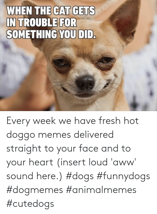Insert: Every week we have fresh hot doggo memes delivered straight to your face and to your heart (insert loud 'aww' sound here.) #dogs #funnydogs #dogmemes #animalmemes #cutedogs
