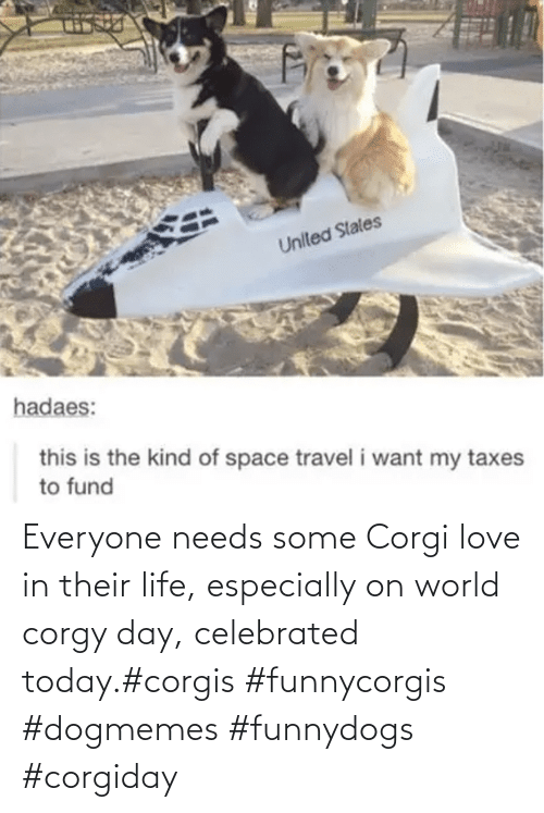 Life: Everyone needs some Corgi love in their life, especially on world corgy day, celebrated today.#corgis #funnycorgis #dogmemes #funnydogs #corgiday