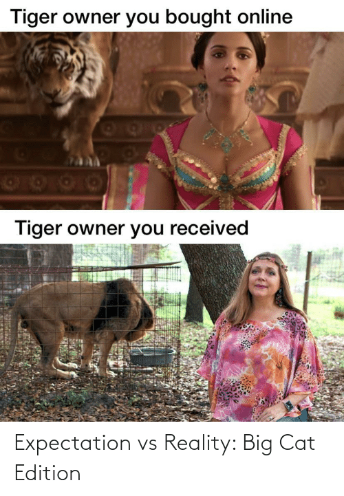 edition: Expectation vs Reality: Big Cat Edition