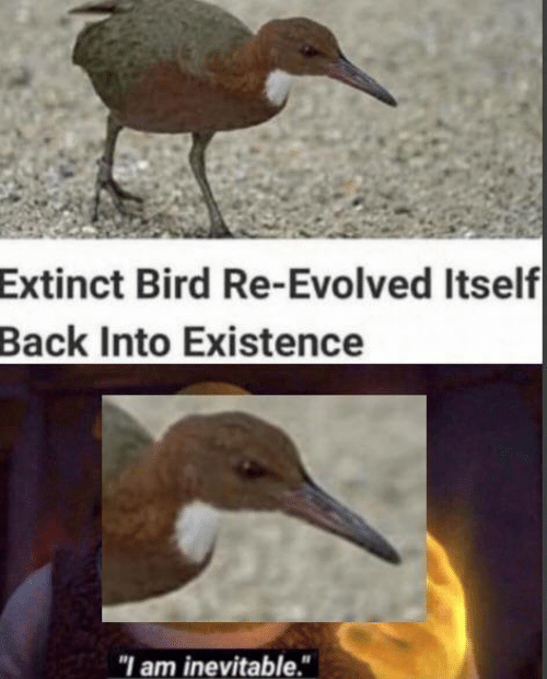 "Memes, Back, and 🤖: Extinct Bird Re-Evolved Itself  Back Into Existence  ""I am inevitable."""