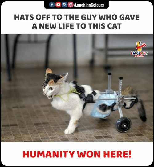 hats off: f  LaughingColours  HATS OFF TO THE GUY WHO GAVE  A NEW LIFE TO THIS CAT  LAUGHING  Celours  HUMANITY WON HERE!  www.