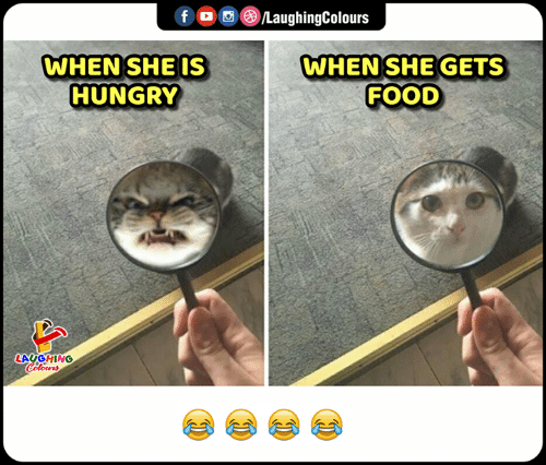 Food, Hungry, and Indianpeoplefacebook: f LaughingColours  WHEN SHEGETS  FOOD  WHEN SHE IS  HUNGRY  LAUGHING  Celeurs