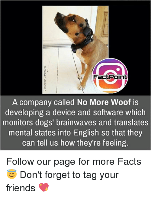 Woofe: FactPoint  A company called No More Woof is  developing a device and software which  monitors dogs' brainwaves and translates  mental states into English so that they  can tell us how they're feeling. Follow our page for more Facts 😇 Don't forget to tag your friends 💖