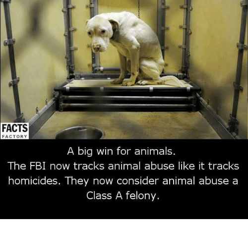Fbi, Memes, and Animal Abuse: FACTS  FACTORY  A big win for animals.  The FBI now tracks animal abuse like it tracks  homicides. They now consider animal abuse a  Class A felony