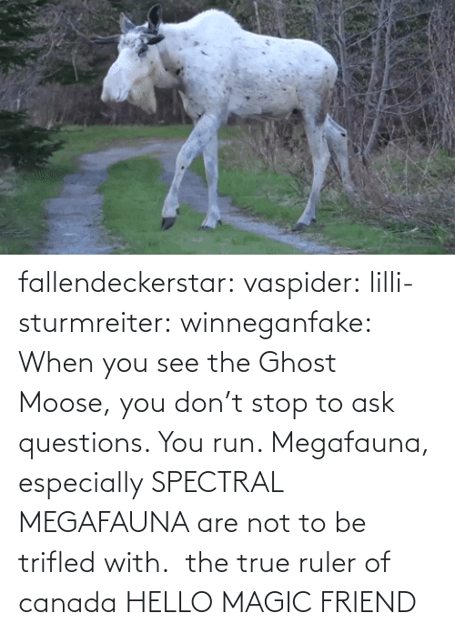 Are Not: fallendeckerstar: vaspider:  lilli-sturmreiter:  winneganfake: When you see the Ghost Moose, you don't stop to ask questions. You run. Megafauna, especially SPECTRAL MEGAFAUNA are not to be trifled with.  the true ruler of canada  HELLO MAGIC FRIEND