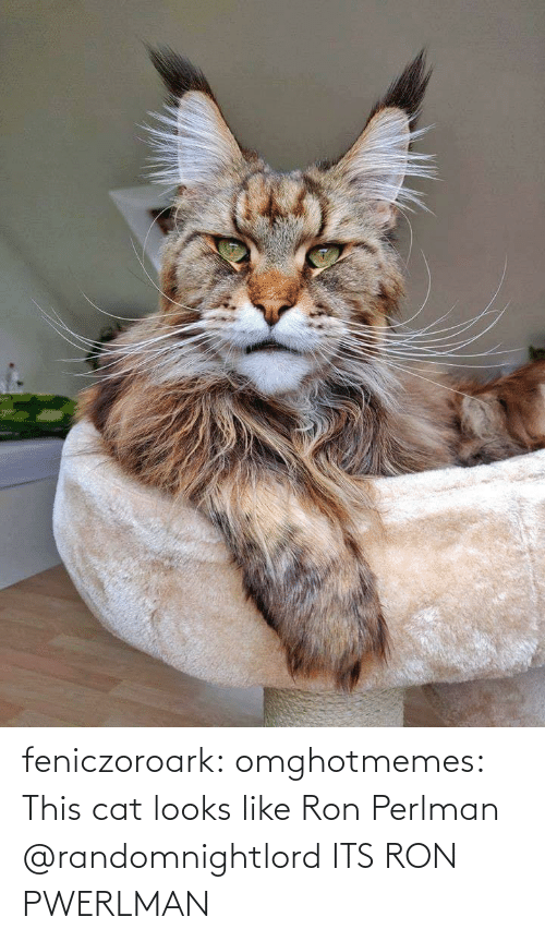 Looks Like: feniczoroark:  omghotmemes:  This cat looks like Ron Perlman   @randomnightlord    ITS RON PWERLMAN