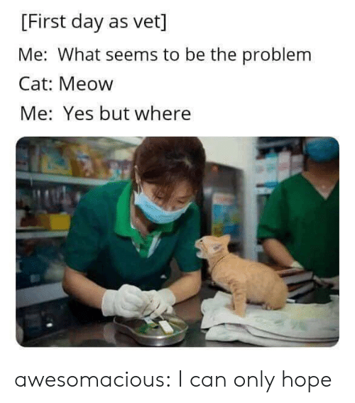meow: [First day as vet]  Me: What seems to be the problem  Cat: Meow  Me: Yes but where awesomacious:  I can only hope