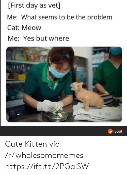 Wholesomememes: [First day as vet]  Me: What seems to be the problem  Cat: Meow  Me: Yes but where  O reddit Cute Kitten via /r/wholesomememes https://ift.tt/2PGalSW