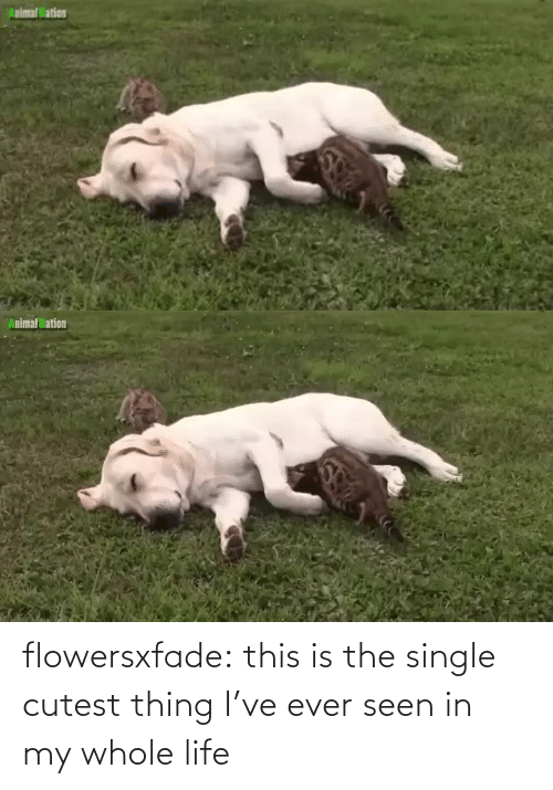 In My: flowersxfade: this is the single cutest thing I've ever seen in my whole life