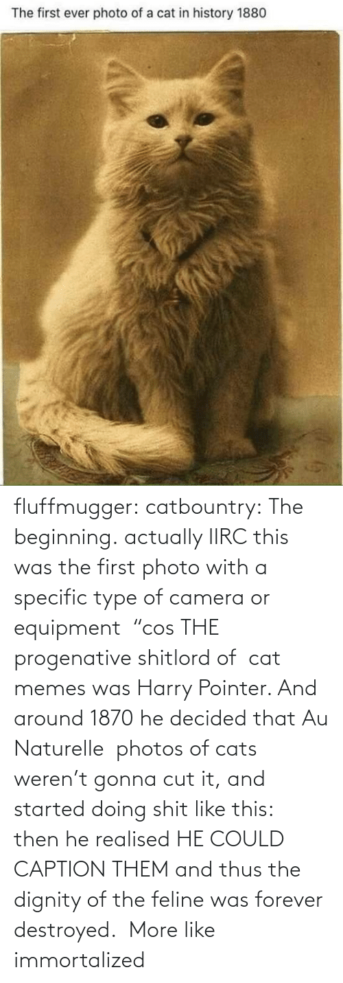 "Actually: fluffmugger:  catbountry: The beginning. actually IIRC this was the first photo with a specific type of camera or equipment  ""cos THE progenative shitlord of  cat memes was Harry Pointer. And around 1870 he decided that Au Naturelle  photos of cats weren't gonna cut it, and started doing shit like this:  then he realised HE COULD CAPTION THEM and thus the dignity of the feline was forever destroyed.     More like immortalized"