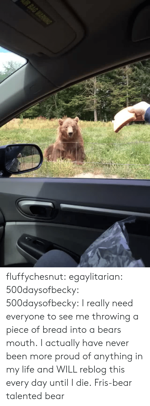 Life, Tumblr, and Bear: fluffychesnut: egaylitarian:  500daysofbecky:  500daysofbecky: I really need everyone to see me throwing a piece of bread into a bears mouth. I actually have never been more proud of anything in my life and WILL reblog this every day until I die.  Fris-bear  talented bear
