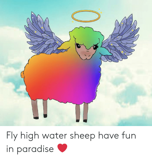 Paradise, Water, and Fun: Fly high water sheep have fun in paradise ❤️