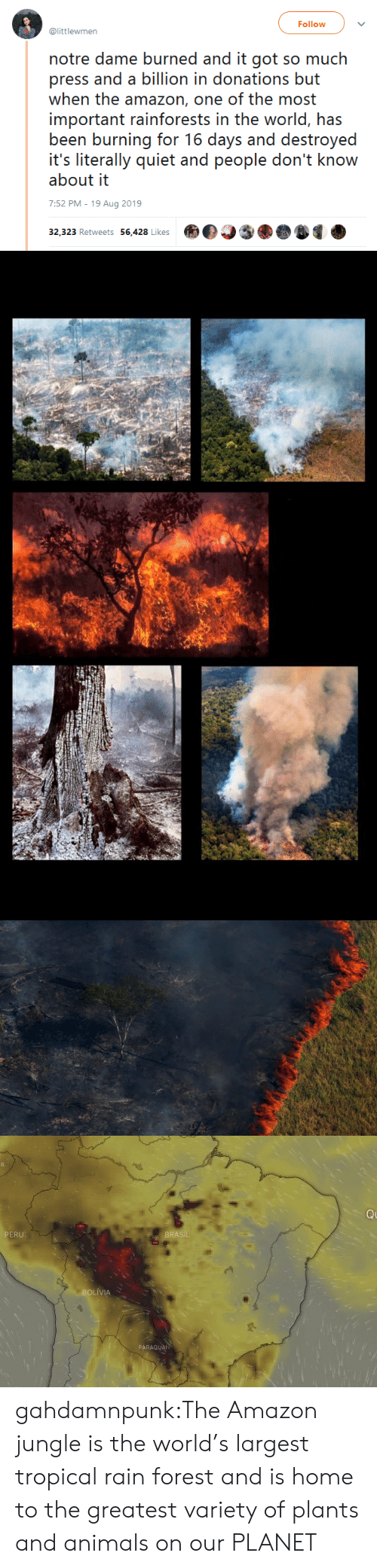 Amazon, Animals, and Tumblr: Follow  @littlewmen  notre dame burned and it got so much  press and a billion in donations but  when the amazon, one of the most  important rainforests in the world, has  been burning for 16 days and destroyed  it's literally quiet and people don't know  about it  7:52 PM - 19 Aug 2019  32,323 Retweets 56,428 Likes   Q  PERU  BRASIL  BOLIVIA  PARAGUAN gahdamnpunk:The Amazon jungle is the world's largest tropical rain forest and is home to the greatest variety of plants and animals on our PLANET