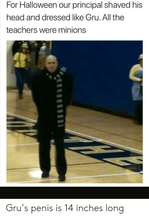 Penis: For Halloween our principal shaved his  head and dressed like Gru. All the  teachers were minions Gru's penis is 14 inches long