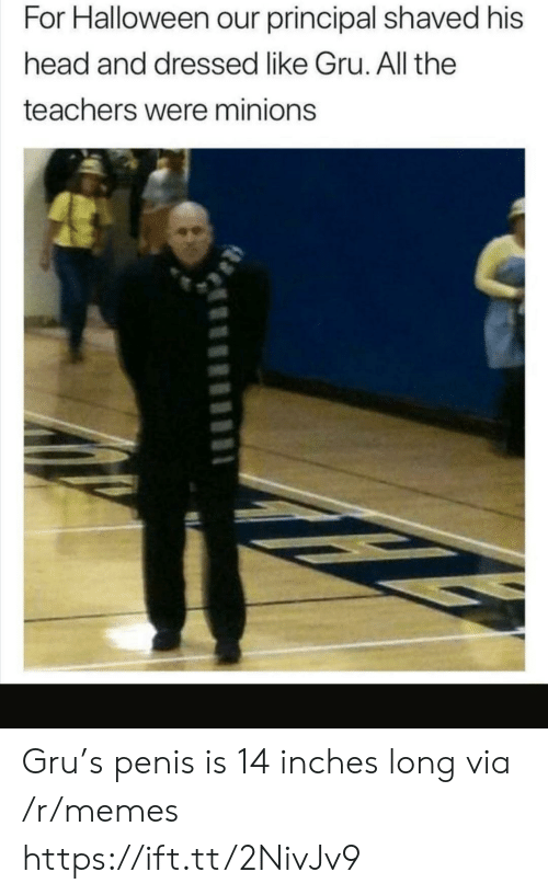 Penis: For Halloween our principal shaved his  head and dressed like Gru. All the  teachers were minions Gru's penis is 14 inches long via /r/memes https://ift.tt/2NivJv9
