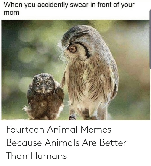 better: Fourteen Animal Memes Because Animals Are Better Than Humans