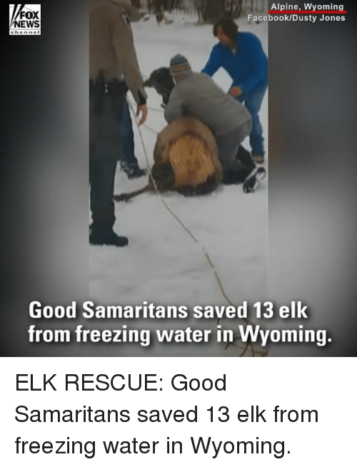 Facebook, Memes, and News: FOX  NEWS  Alpine, Wyoming  Facebook/Dusty Jones  Good Samaritans saved 13 elk  from freezing water in Wyoming. ELK RESCUE: Good Samaritans saved 13 elk from freezing water in Wyoming.