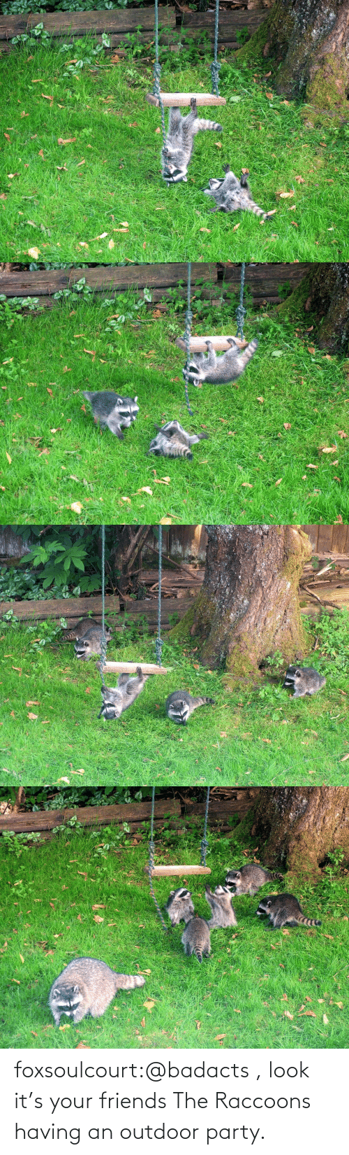 Having: foxsoulcourt:@badacts , look it's your friends The Raccoons having an outdoor party.