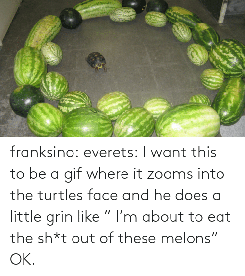 """Sh T: franksino: everets:  I want this to be a gif where it zooms into the turtles face and he does a little grin like """" I'm about to eat the sh*t out of these melons""""  OK."""