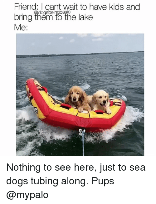 Dogs, Memes, and Kids: Friend: I cant wait to have kids and  bring ihen to the lake  Me:  dogsbeingbasic Nothing to see here, just to sea dogs tubing along. Pups @mypalo