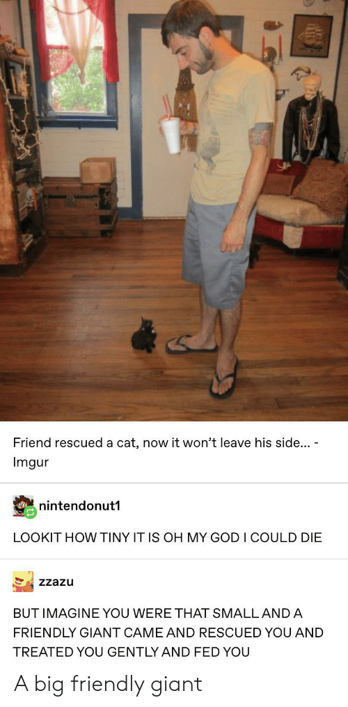God, Oh My God, and Giant: Friend rescued a cat, now it won't leave his side...  Imgur  nintendonut1  LOOKIT HOW TINY IT IS OH MY GOD I COULD DIE  Zzazu  BUT IMAGINE YOU WERE THAT SMALL AND A  FRIENDLY GIANT CAME AND RESCUED YOU AND  TREATED YOU GENTLY AND FED YOU A big friendly giant
