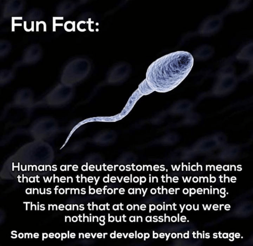womb: Fun Fact:  Humans are deuterostomes, which means  that when they develop in the womb the  anus forms before any other opening.  This means that at one point you were  nothing but an asshole.  Some people never develop beyond this stage
