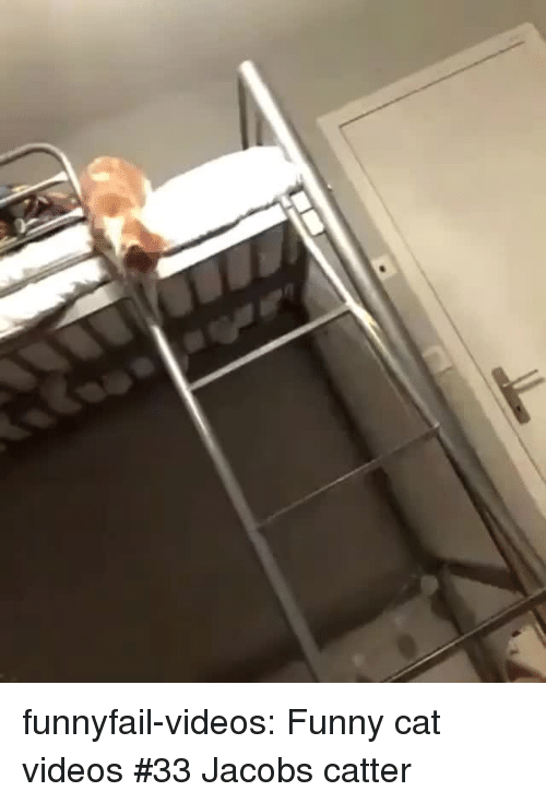 xyz: funnyfail-videos:  Funny cat videos #33  Jacobs catter
