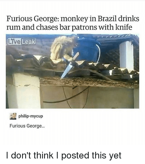Memes, Brazil, and Live: Furious George: monkey in Brazil drinks  rum and chases bar patrons with knife  Live  Leak  philip-mycup  Furious George. I don't think I posted this yet