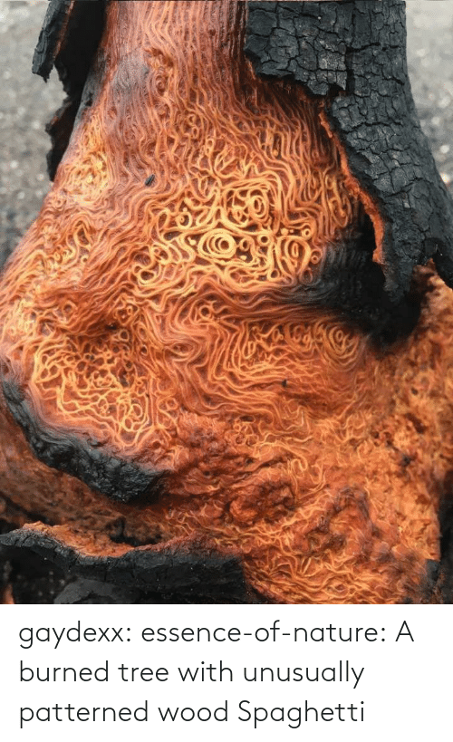 burned: gaydexx: essence-of-nature:   A burned tree with unusually patterned wood    Spaghetti