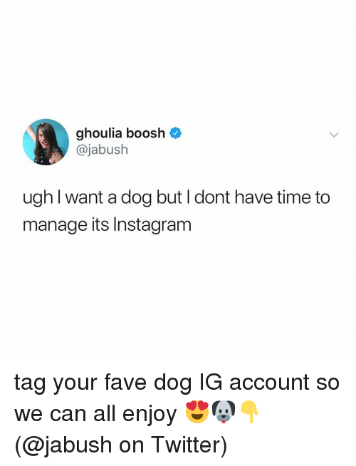 Memes, Twitter, and Fave: ghoulia boosh  @jabush  ugh I want a dog but l dont have time to  manage its Instagranm tag your fave dog IG account so we can all enjoy 😍🐶👇 (@jabush on Twitter)