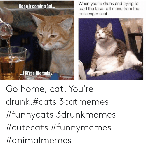 Drunk: Go home, cat. You're drunk.#cats 3catmemes #funnycats 3drunkmemes #cutecats #funnymemes #animalmemes