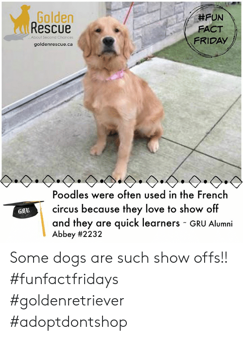 Golden Rescue #FUN FACT FRIDAY About Second Chances