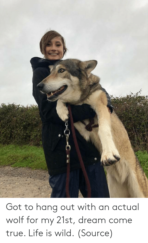 Hang: Got to hang out with an actual wolf for my 21st, dream come true. Life is wild.(Source)