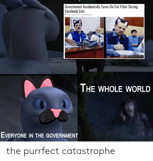 Facebook, Live, and World: Government Accidentally Turns On Cat Filter During  Facebook Live  BY EMILY BROWN ON 17 JUN 2019 0908  @nailainayatTwiter  THE WHOLE WORLD  EVERYONE IN THE GOVERNMENT the purrfect catastrophe